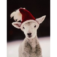 Lamb Holiday Cards